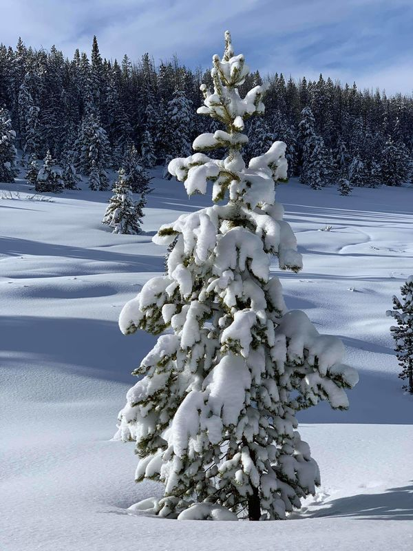 Merry Christmas from Steamboat Springs, this littl...