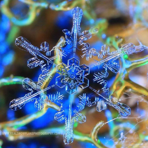 This is a real snowflake(not like the left. Lolol)...